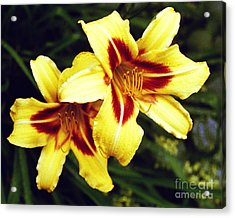 Acrylic Print featuring the photograph Yellow Daylilies  by Tom Brickhouse