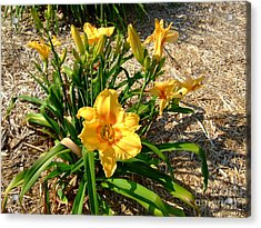 Acrylic Print featuring the photograph Yellow Daylily by Deborah DeLaBarre