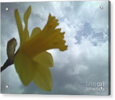Yellow Delight Acrylic Print by Thommy McCorkle