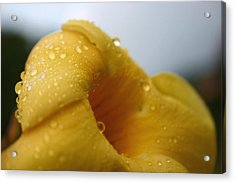 Yellow Droplets Acrylic Print by Frederico Borges