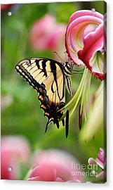 Yellow Eastern Swallowtail Butterfly Acrylic Print by Eva Kaufman