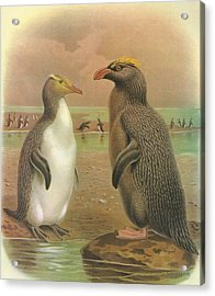 Yellow Eyed Penguin And Snares Crested Penguin  Acrylic Print by Rob Dreyer