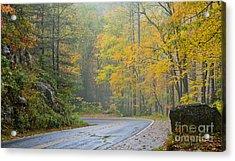 Yellow Fall Roadside Scenic Acrylic Print