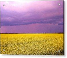 Yellow Field Purple Sky Acrylic Print by Cathy Long