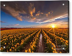 Yellow Fields And Sunset Skies Acrylic Print by Mike Reid