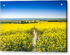 Acrylic Print featuring the photograph Yellow Fields. by Gary Gillette