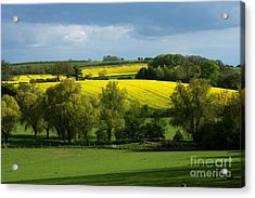 Yellow Fields In The Sun Acrylic Print