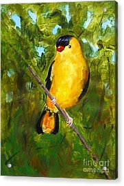 Yellow Finch Acrylic Print by Valerie Lynch