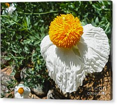 Yellow Flower - 02 Acrylic Print by Gregory Dyer