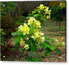 Yellow Flower Bush Acrylic Print by Judith Russell-Tooth