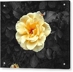 Yellow Flower Acrylic Print by Felix Concepcion
