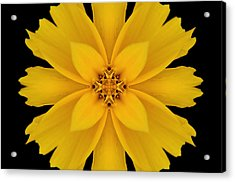 Yellow Flower Kaleidoscope Abstract Acrylic Print by Don Johnson