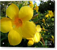 Acrylic Print featuring the photograph Yellow Flower by Kristine Merc