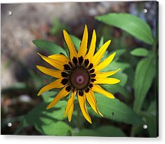 Yellow Flower Acrylic Print by Michele Kaiser
