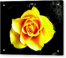 Yellow Flower On A Dark Background Acrylic Print