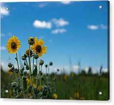 Yellow Flower On Blue Sky Acrylic Print