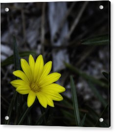 Yellow Flower Soft Focus Acrylic Print