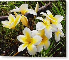 Yellow Flowers 1 Acrylic Print