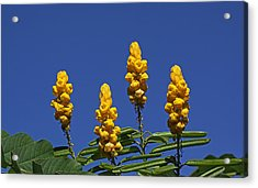 Yellow Flowers Against Blue Sky Acrylic Print