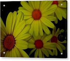 Yellow Flowers Acrylic Print by Andrea Galiffi