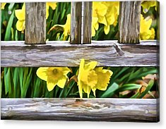 Yellow Flowers By The Bench Acrylic Print by David Letts