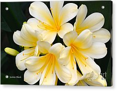 Acrylic Print featuring the photograph Clivia Yellow Flowers by Jeannie Rhode