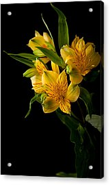 Acrylic Print featuring the photograph Yellow Flowers by Sennie Pierson
