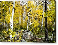 Yellow Forest Acrylic Print by Baywest Imaging