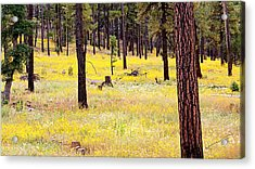 Yellow Forest Acrylic Print by Kume Bryant