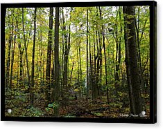 Acrylic Print featuring the photograph Yellow Forrest by Michaela Preston