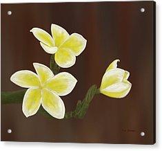 Yellow Frangipani Acrylic Print by Tim Stringer