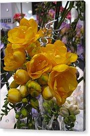 Yellow Freesia Acrylic Print by Alfred Ng