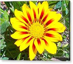 Acrylic Print featuring the photograph Yellow Garden Gerber by Elvira Ladocki