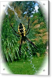 Yellow Garden Spider Acrylic Print by Linda Walker
