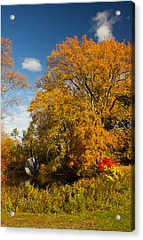 Acrylic Print featuring the photograph Yellow Giant by Jose Oquendo