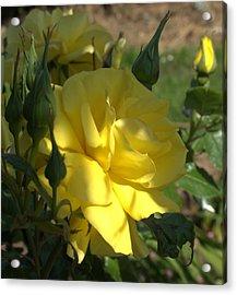 Yellow Grace Acrylic Print