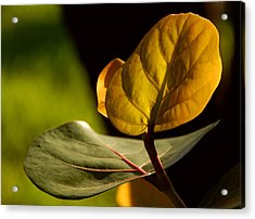 Yellow-green Acrylic Print