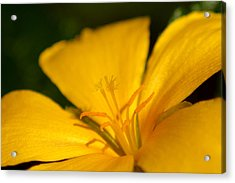 Yellow Acrylic Print by Greg Allore