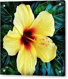 Yellow Hibiscus 2 Acrylic Print by Darice Machel McGuire