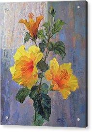 Yellow Hibiscus Flower Acrylic Print