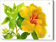 Yellow Hibiscus Flower Acrylic Print by Sharon Freeman