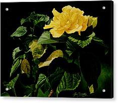 Yellow Hibiscus Acrylic Print by Gary  Hernandez