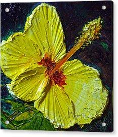 Yellow Hibiscus Acrylic Print by Paris Wyatt Llanso