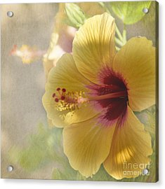 Yellow Hibiscus Acrylic Print by Peggy Hughes