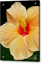 Acrylic Print featuring the painting Yellow Hibiscus by Rand Herron