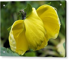 Acrylic Print featuring the photograph Yellow In Rain by Gene Cyr