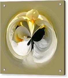 Yellow Iris 101 Acrylic Print