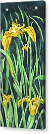 Yellow Iris Acrylic Print by Richard De Wolfe