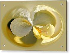 Yellow Iris Series 104 Acrylic Print