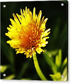 Acrylic Print featuring the photograph Yellow Is A Colour.. by Al Fritz
